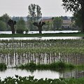 http://www.emotocykl.pl #powódź #plock