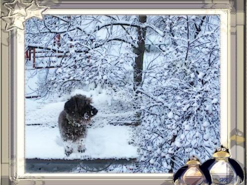 Lusia zimową porą, bardzo to lubi! #PSP #grafika #MojePrace #Lusia #zima