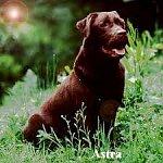 http://images45.fotosik.pl/583/17e26506c07678acm.jpeg