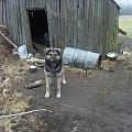 antol #zwierzęta #pies #pieseczek #dog