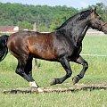 #Arkadia #Boy #KAma #ślązaki #WielkaLipa #konie #stadnina
