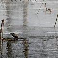 Rzeka Brda - 25.02.2011 - zdjęcie z samotnego spływu kajakowego. #Brda
