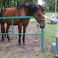 Zaklinaczka koni :-) Już uśpiony! #Polesie #Okuninka #koń