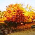 #jesień #DużeDrzewo #ławka #schody #schodki #JesienneKolory