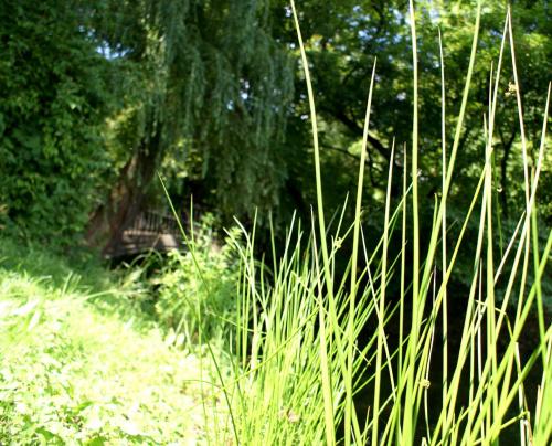 Park Skaryszewski #park #trawa #drzewa