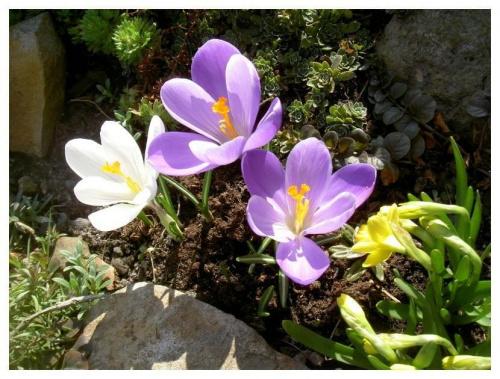 Wiosna nadeszła............... #wiosna