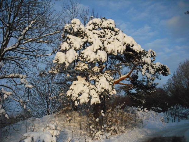 zima 2009 #zima